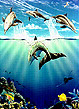 """Day of the Dolphin"" Painting by Apollo © Whale Art and Dolphin Art This painting of Dolphins is not a wyland please do not confuse his work with Apollo's Art."