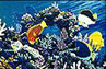 save our reefs, marine art, dolphin paintings, whale paintings by Apollo environmental artist©