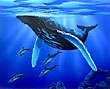 humpback whale surfaving with dolphins . Whale Art and Dolphin Art  This painting of Whales is not a wyland please do not confuse his work with Apollo's Art.