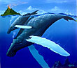 mother humpback whale and baby diving. Whale Art and Dolphin Art  This painting of Whales is not a wyland please do not confuse his work with Apollo's Art.